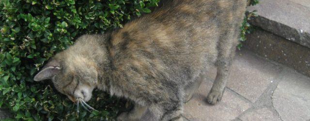 Come marchiano il territorio i gatti?