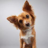 I cani hanno un super udito?