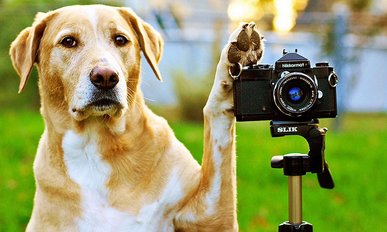 Il cane riconosce il padrone da una foto?