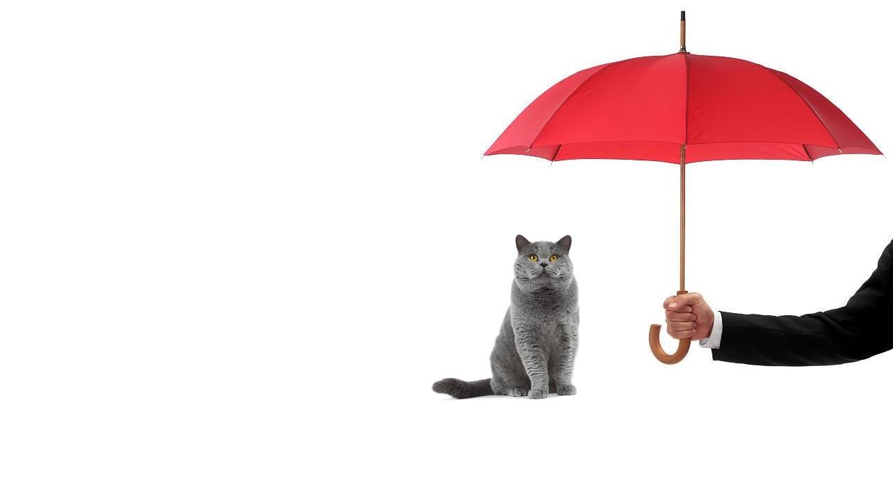 I gatti prevedono il brutto tempo?