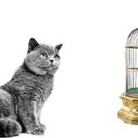 Perché i gatti battono i denti quando vedono un uccellino?