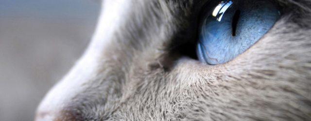 Perché i gatti non sbattono le palpebre?