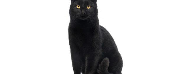 Perché il gatto nero porta sfortuna?