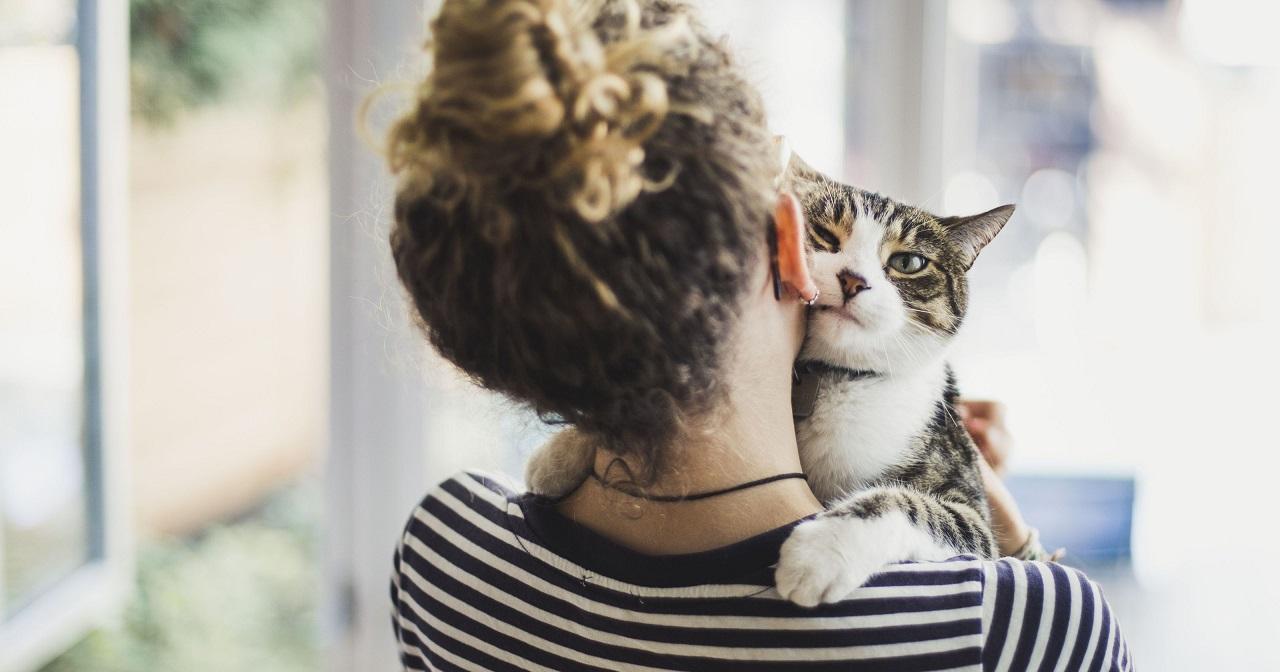 L'inizio del rapporto tra umani e gatti