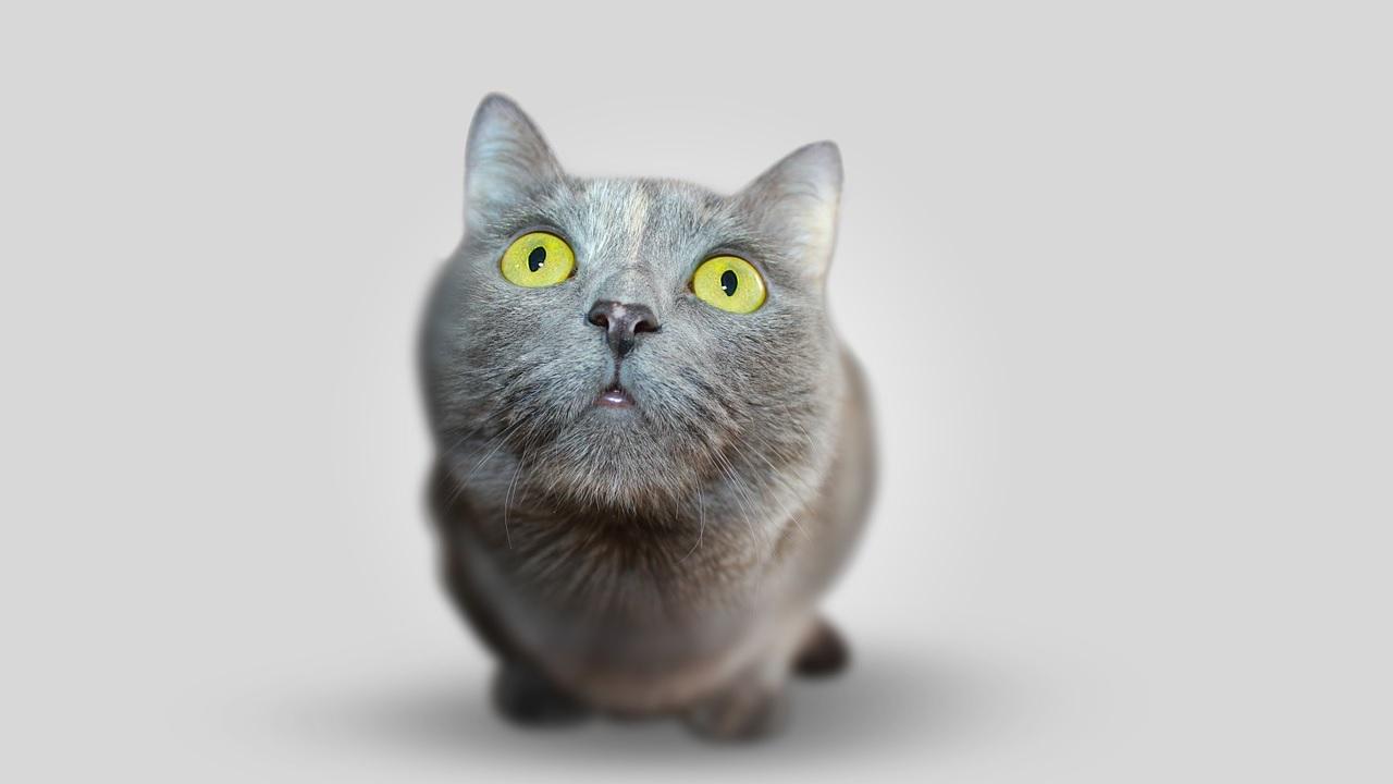 Quanto e come vedono i gatti?