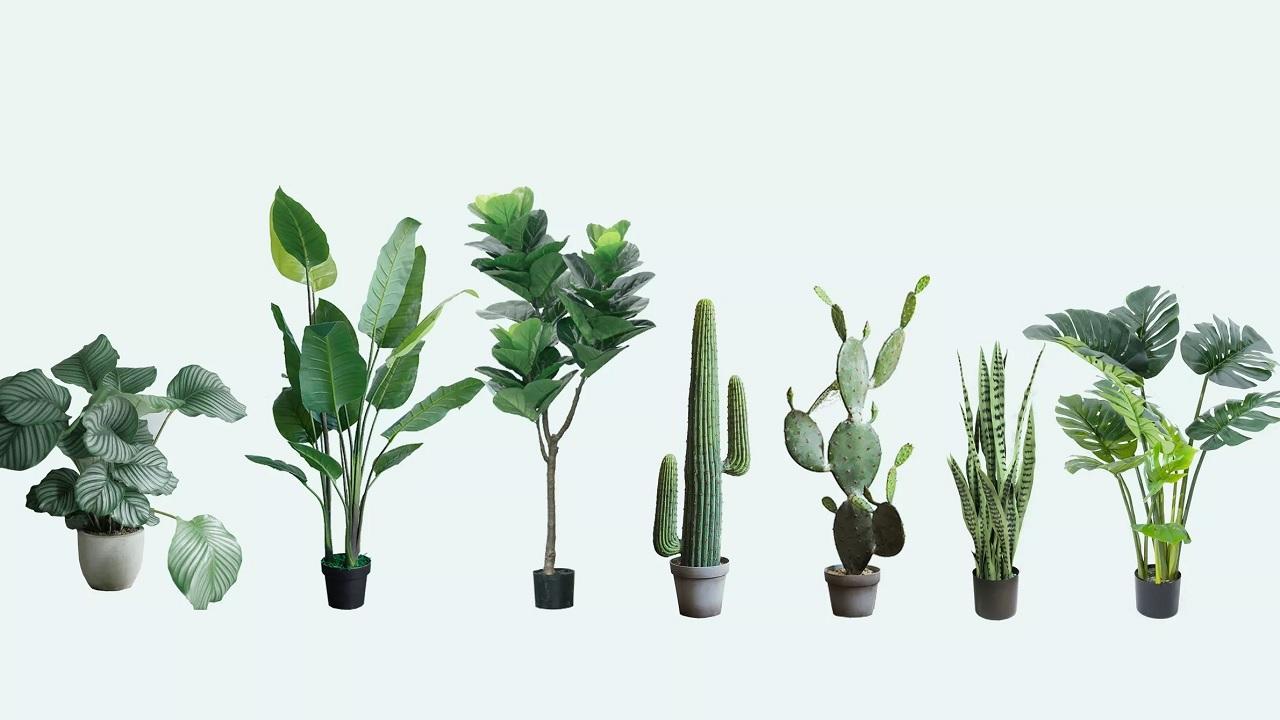 Le piante sentono i rumori?