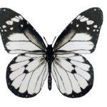 Cos'è l'effetto farfalla?