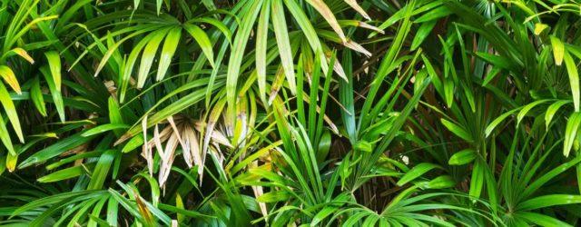 Le piante di notte dormono?