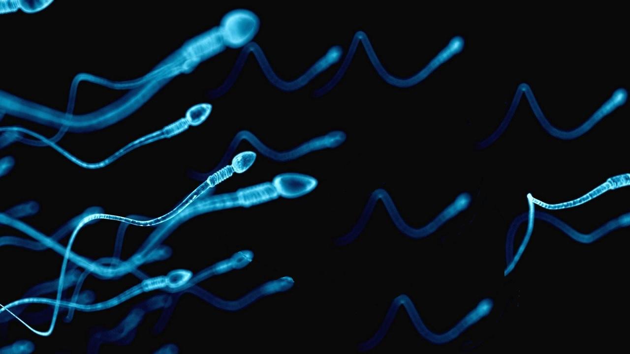 I maschi sono più fertili in estate?