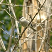 Come fanno gli uccelli a non sbattere sui rami?