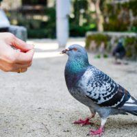 È meglio non dare le molliche di pane ai pesci e uccelli?