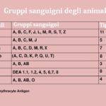 Gli animali hanno gruppi sanguigni differenti?