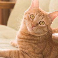 I gatti riconoscono il nome?