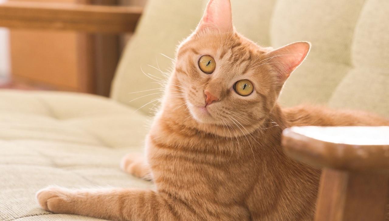 I gatti riconoscono il proprio nome?