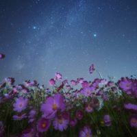 Perché quasi tutti fiori di notte si chiudono?