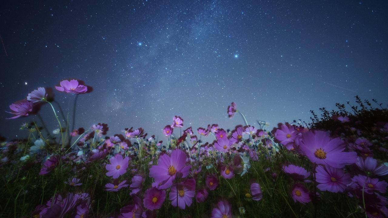 Perché di notte i fiori si chiudono?