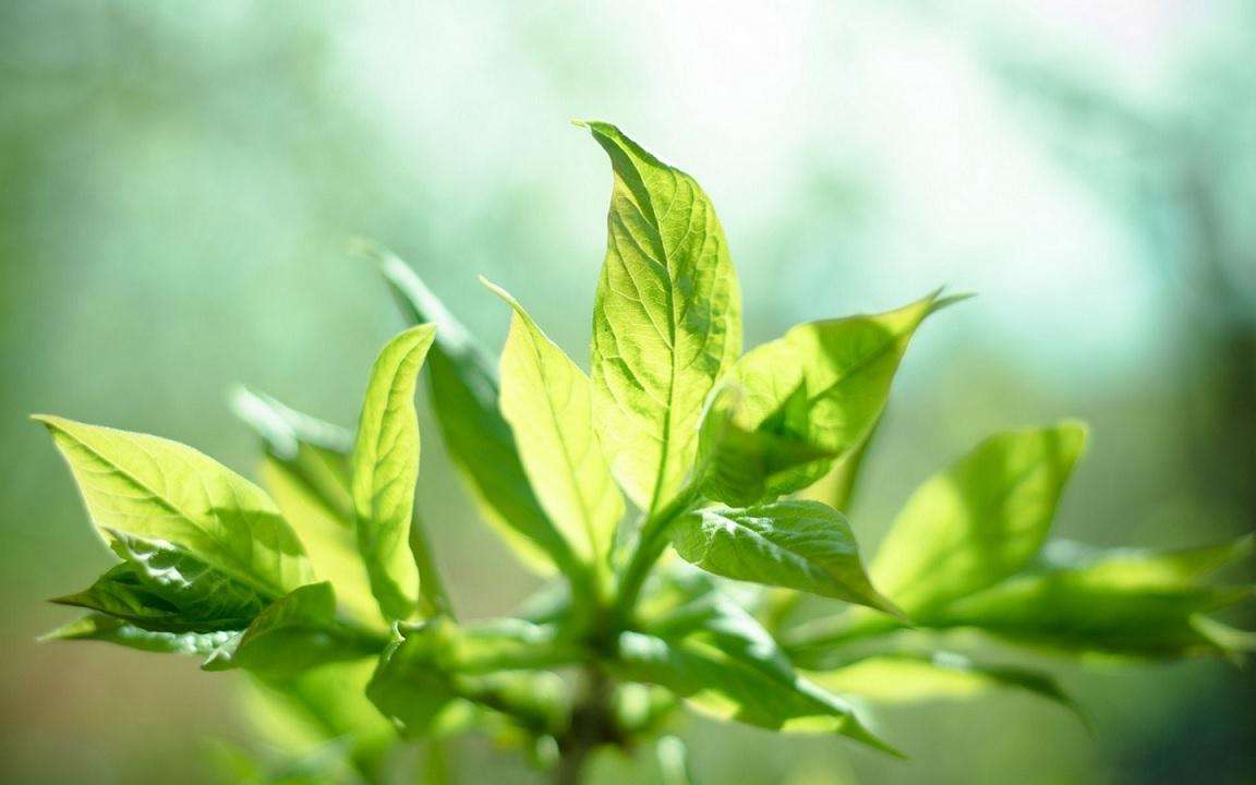 Le piante come riescono a crescere verso la luce?