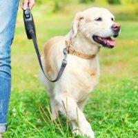 Come si riconoscono i cani dominanti?