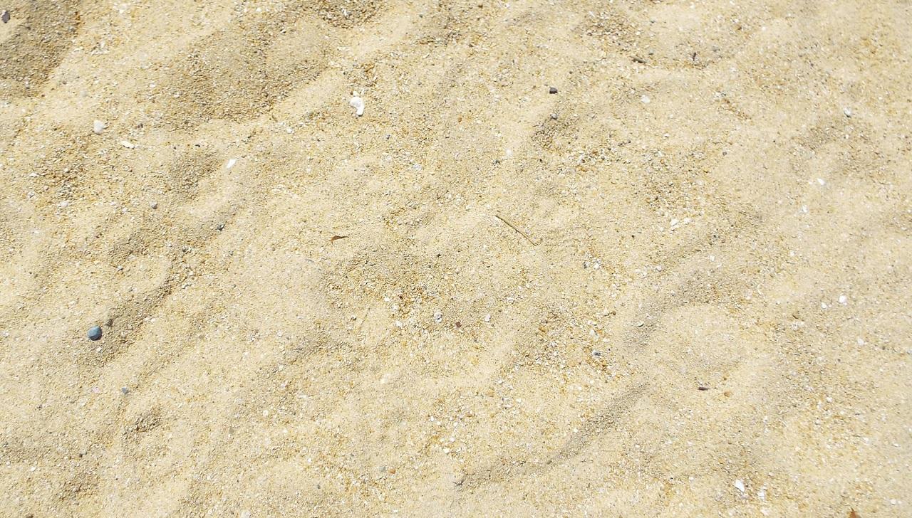 Quanti batteri ci sono nella sabbia?