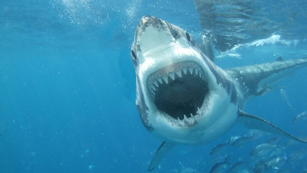 Tavola da surf anti squali