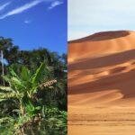 Perché esistono posti caldi deserti e in altri foreste pluviali?