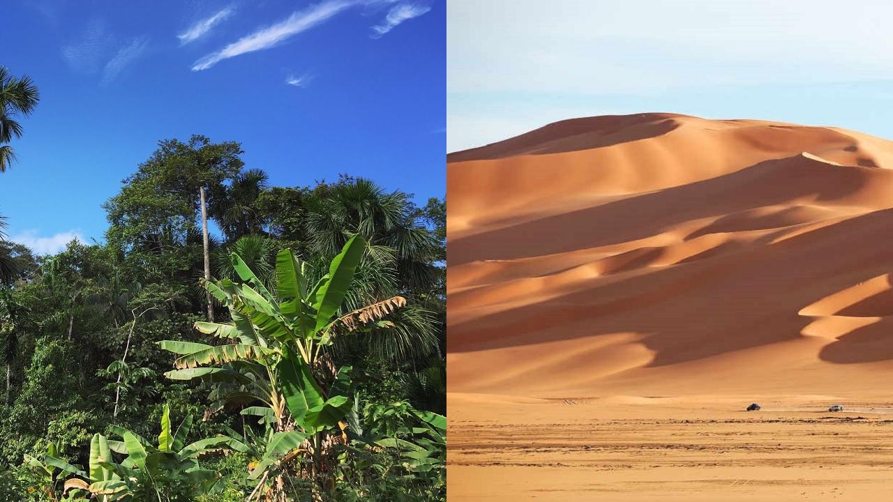 Deserti caldi e foreste pluviali