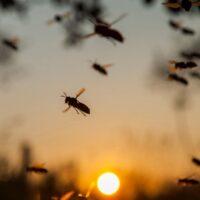 Da cosa è causato il ronzio degli insetti?