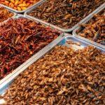 Alcuni insetti si possono mangiare?
