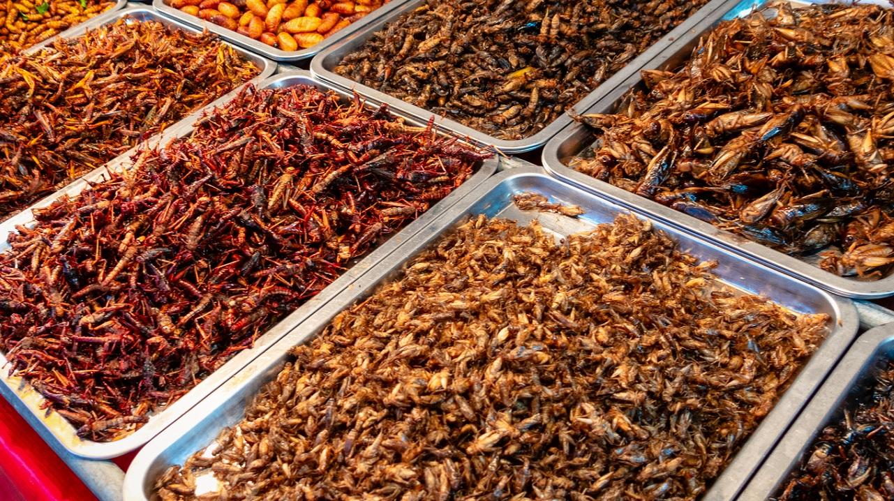 Alcuni insetti sono commestibili?