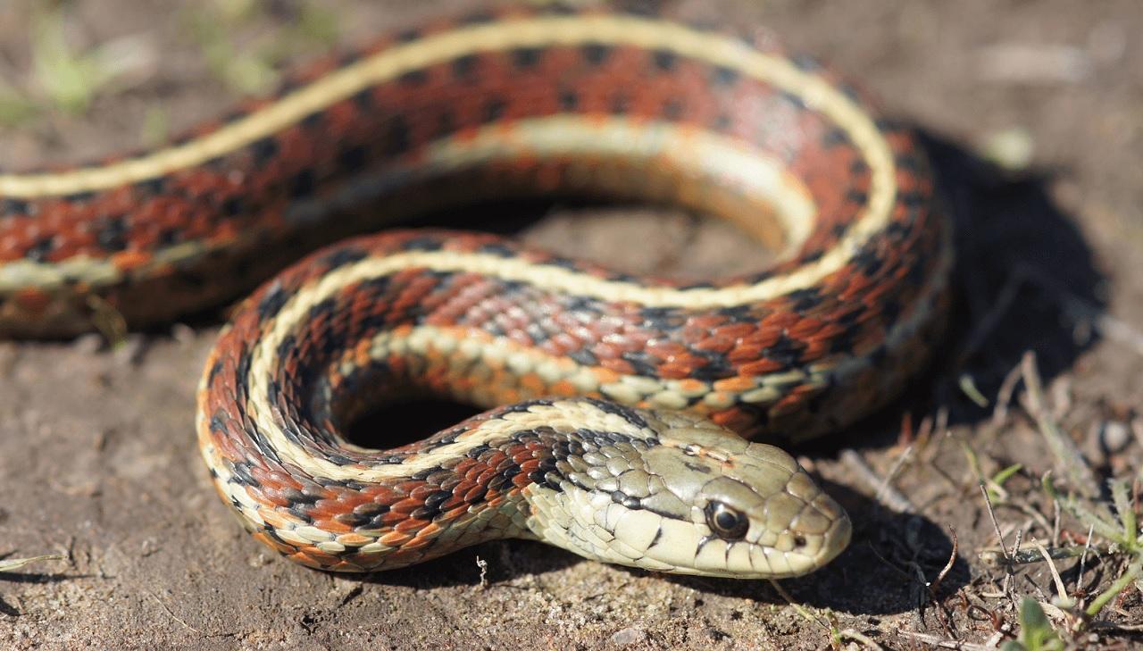 I serpenti possono essere amici tra di loro?