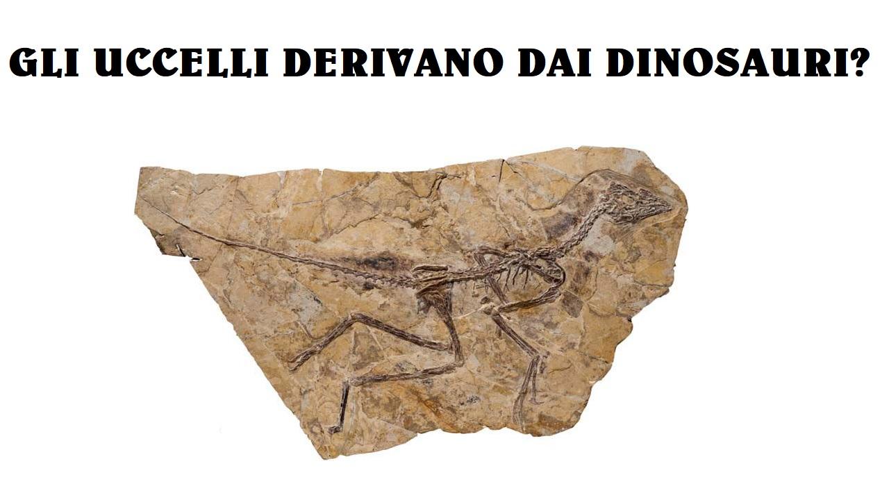 Gli uccelli discendono dai dinosauri?