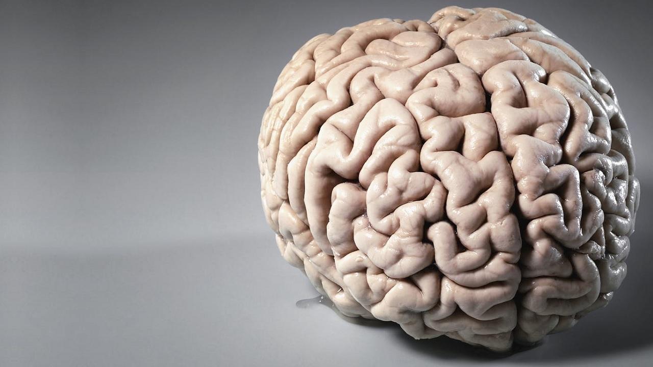 Sarà mai costruito un cervello umano in provetta?
