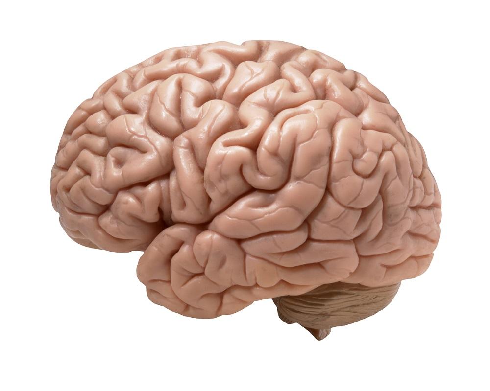 Di che colore è il cervello?