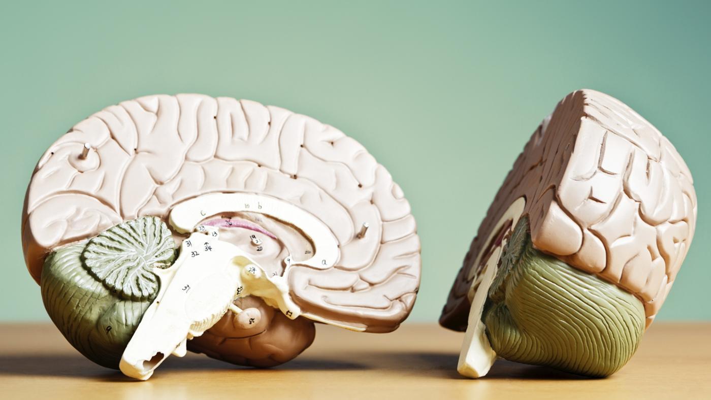 L'emisfero sinistro è deputato all'elaborazione del linguaggio?