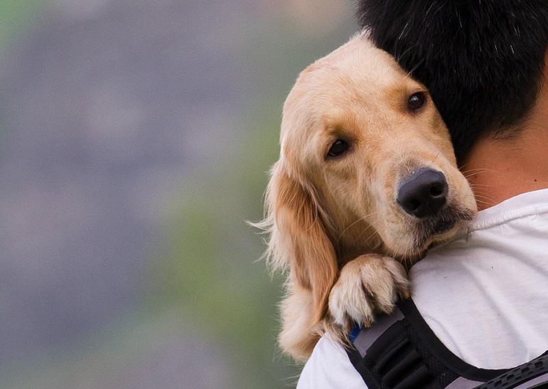 Perché vogliamo bene al nostro cane?