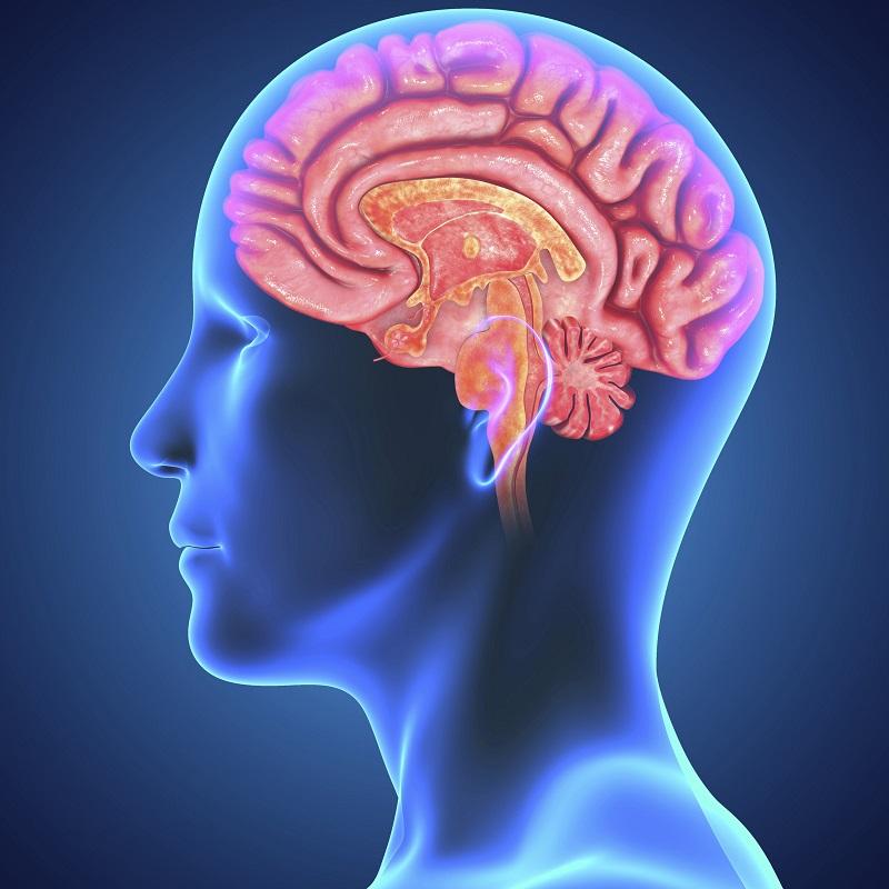 Quali sono le principali tecniche per lo studio del cervello?