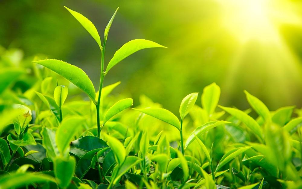 Come riescono le piante a comunicare fra loro?