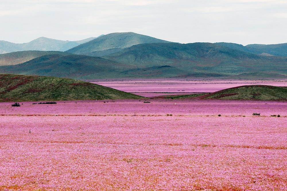 Cosa accade se piove nel deserto più arido del globo?