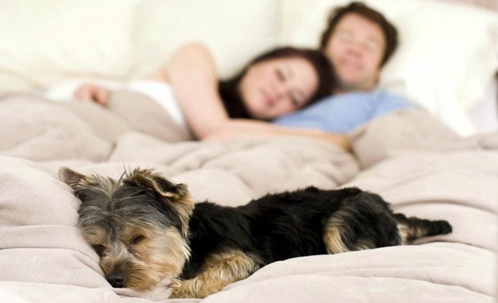 Cosa succede a dormire con un animale?
