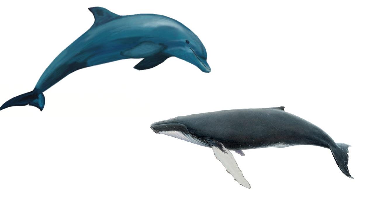 L'antenato dei delfini e delle balene era un animale di natura terrestre