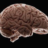 Perché non si può trapiantare il cervello?