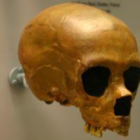 Quando si sono estinti i Neanderthal?