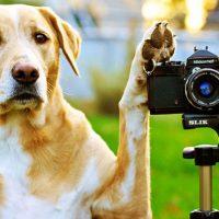 I cani riconoscono i padroni dalle foto?