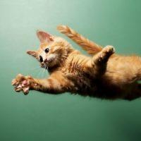 Perché i gatti hanno 7 vite?