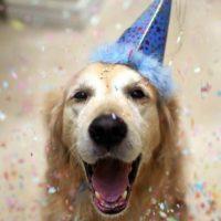 Un anno di vita equivale a sette di un cane?