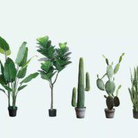 Le piante percepiscono i rumori?