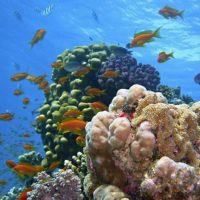 Che cosa sta distruggendo le barriere coralline?