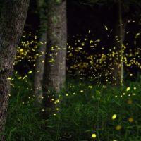 L'inquinamento luminoso sta riducendo le specie di insetti?