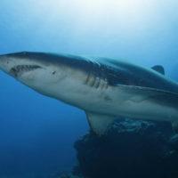 Di cosa hanno paura gli squali?