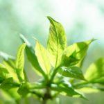 Come fanno le piante a crescere verso la luce?